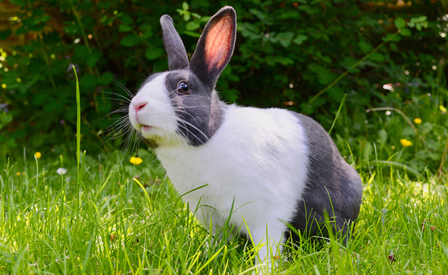 Some Bunny Needs You: February is Adopt a Rescued Rabbit Month