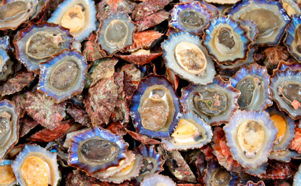 The Shellfish Know Climate Change is Real