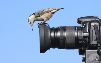 Good News: Birdwatching is More Popular than Hunting