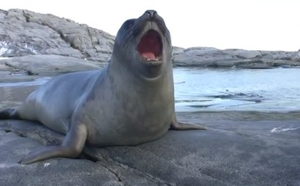Cute Animal Video of the Day: Curious Baby Elephant Seal