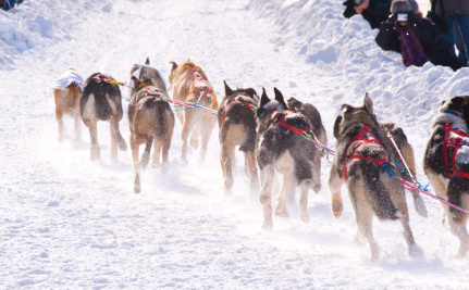 Iditarod Mushers Kill Thousands of Dogs