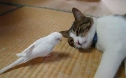 Cute Animal Video of the Day: Persistent Bird Wakes Up His Playmate