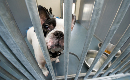 Texans Fight to End Gas Chamber Euthanasia