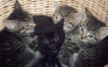 4 Ways to Help Homeless Cats