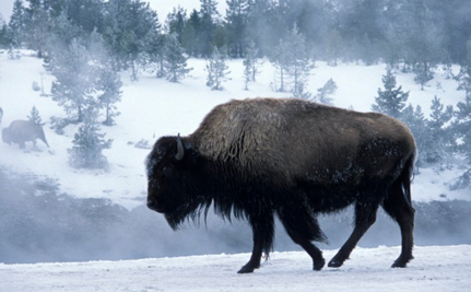 Sequester Taking A Toll On Yellowstone, Grand Canyon