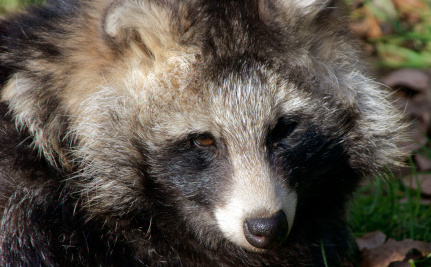"""Faux"" Fur is Often Real Fur from Real Animals. Don't Buy It."