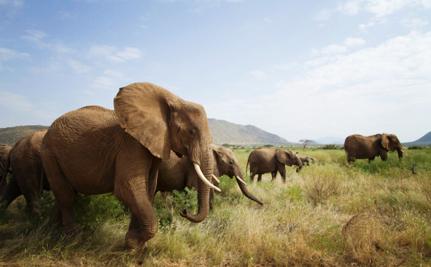 28 Endangered Elephants Killed by Poachers