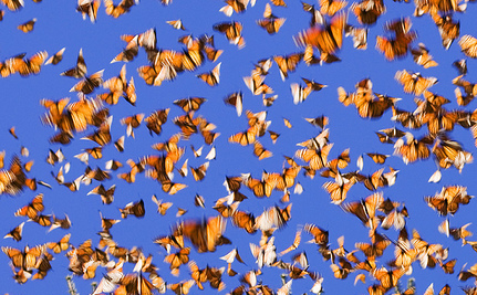Where Have All Monarchs Gone >> Where Have All The Monarch Butterflies Gone Care2 Causes