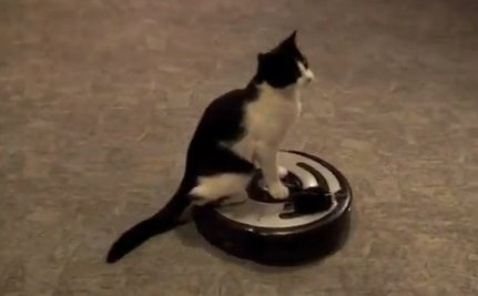 Cute Animal Video of the Day: Kitty's First Ride
