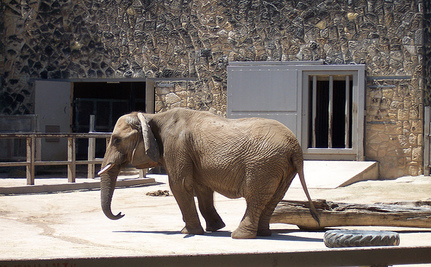 Queenie The Elephant Is Dead: Take Action To Help Her Companion