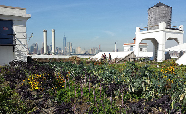 The Five Best (and Worst) U.S. Cities For Urban Gardening