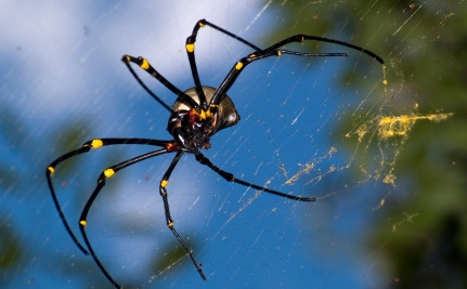 """Cases of """"Spider Eats Bat"""" Can Happen Anywhere (Except Antarctica)"""