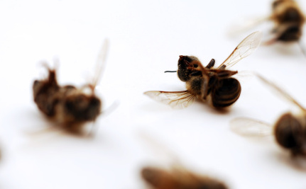 Poisoned Bees Will Get Their Day In Court
