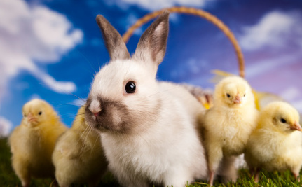Don't Adopt a Rabbit or Chick for Easter