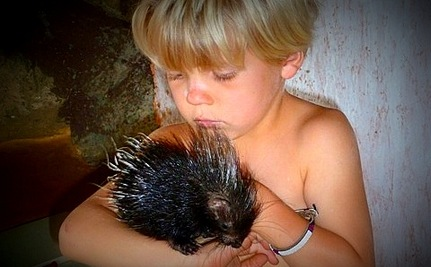 One Family's Adventures Raising a Cuddly Baby Porcupine