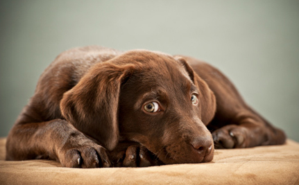 No More Second Chances for Animal Abusers in New Jersey