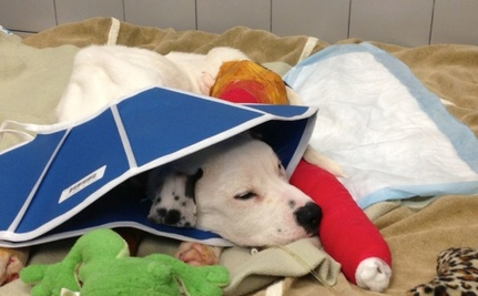 Freckles the Dog Slowly Recovering from Abuse, Starvation