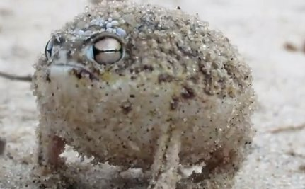 Cute Animal Video of the Day: Amphibians are Cute, Too