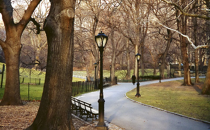 Study Shows a Walk in the Park Fixes a Fuzzy Brain