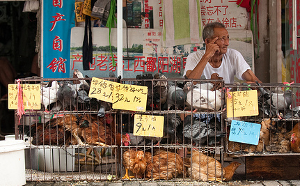 Should We Panic About the New Bird Flu in China? No, But…