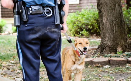Colorado Wants to Stop Police From Shooting Dogs
