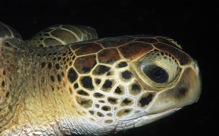 What Countries Care About Leatherback Turtles?