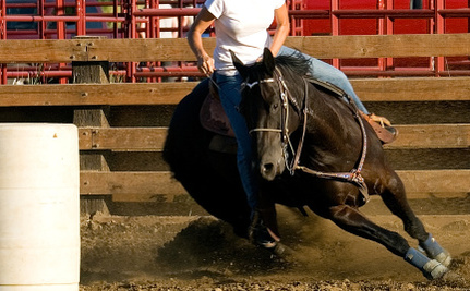 """Nevada May Ban Horse Tripping, a Cruel and Dangerous Rodeo """"Sport"""""""