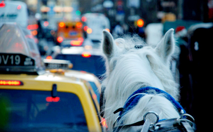 Horse-Drawn Carriage Cruelty a Big Issue in NYC Mayoral Race