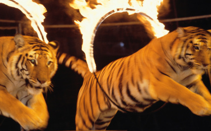 Success! U.K. Saves Wild Animals from Kidnapping and Circus Life