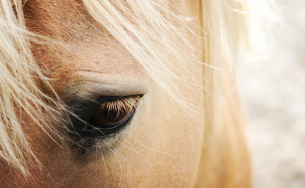 Let's Make It a Crime to Stick Nails in Horses' Hooves