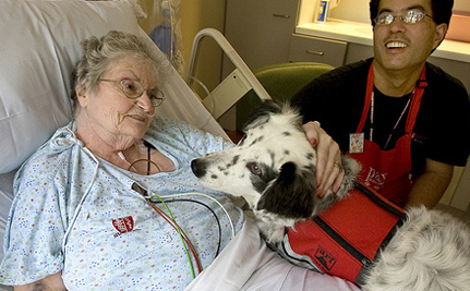 Should Pets Be Allowed In Hospitals?