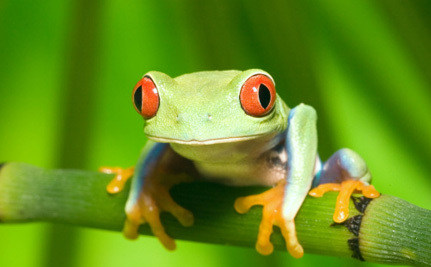 ICYMI: Amphibian Lovers Unite for Save the Frogs Day