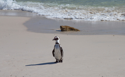Why Aren't There Penguins Everywhere?