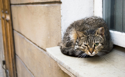 Instead of Killing Homeless Cats, Could We Let Them Live Outside?