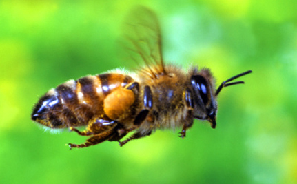 Success! Europe Votes to Save Bees from Deadly Pesticides
