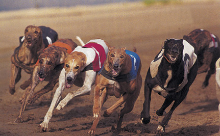 2-Year-Old Greyhound Dies by Electrocution During a Race