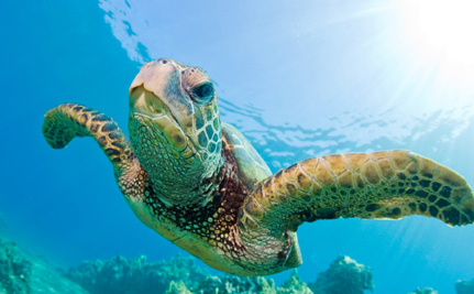 Sea Turtles Can Feel Safe in Mexico Thanks to New Protections