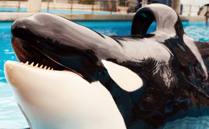 Lolita the Orca is One Step Closer to Being Freed