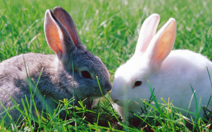 Two Bunnies Saved From Research Lab! Most Bunnies Aren't That Lucky