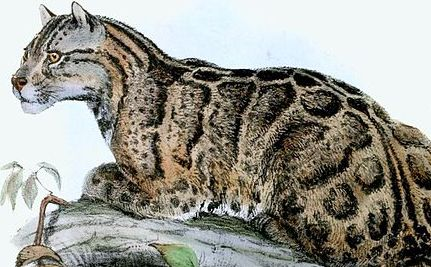 The Only Clouded Leopard in Taiwan is Stuffed in a Museum