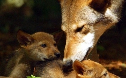 In the Animal Kingdom, Every Day is Mother�s Day