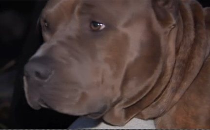 Pit Bull Rescues Woman From Burning House