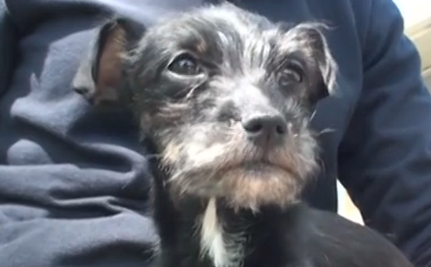 It's A Miracle! Puppy Survives 4 Weeks In A Locked Car