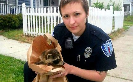 All in a Day's Work: Officer Rescues Kittens, Raccoons and More