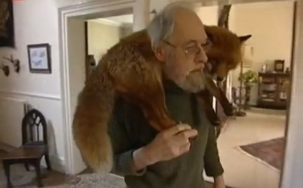 Daily Cute: Man and Fox – A Love Story