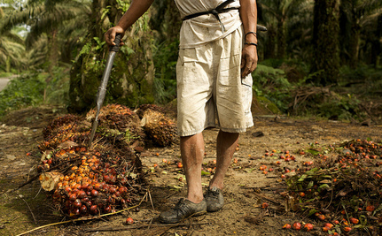 Why 'RSPO Sustainable Palm Oil' is Not Responsible