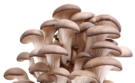 The Top 5 Reasons You Need More Fungus In Your Mouth