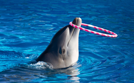 Success! India Takes Progressive Stand Against Captive Dolphins
