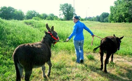 Donkey Mother and Foal Walk Free Thanks to Rescuers in Serbia