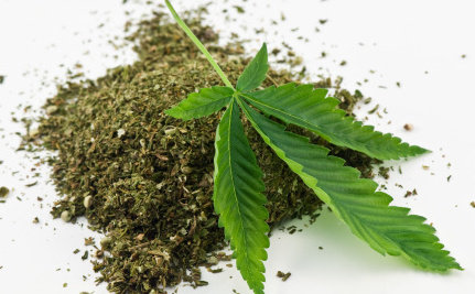 Marijuana Users May Have Lower Diabetes Risk
